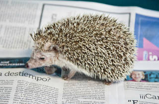 Exotic Pet Medical (Foto: Alejandra Carbajal)