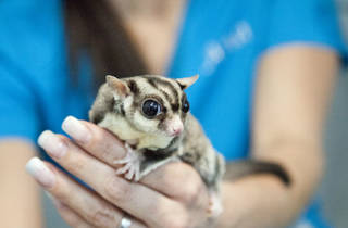 Exotic Pet Medical (Foto: Alejandra Carbajal)