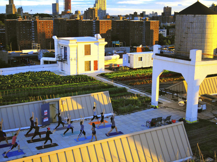 Yoga at Brooklyn Grange