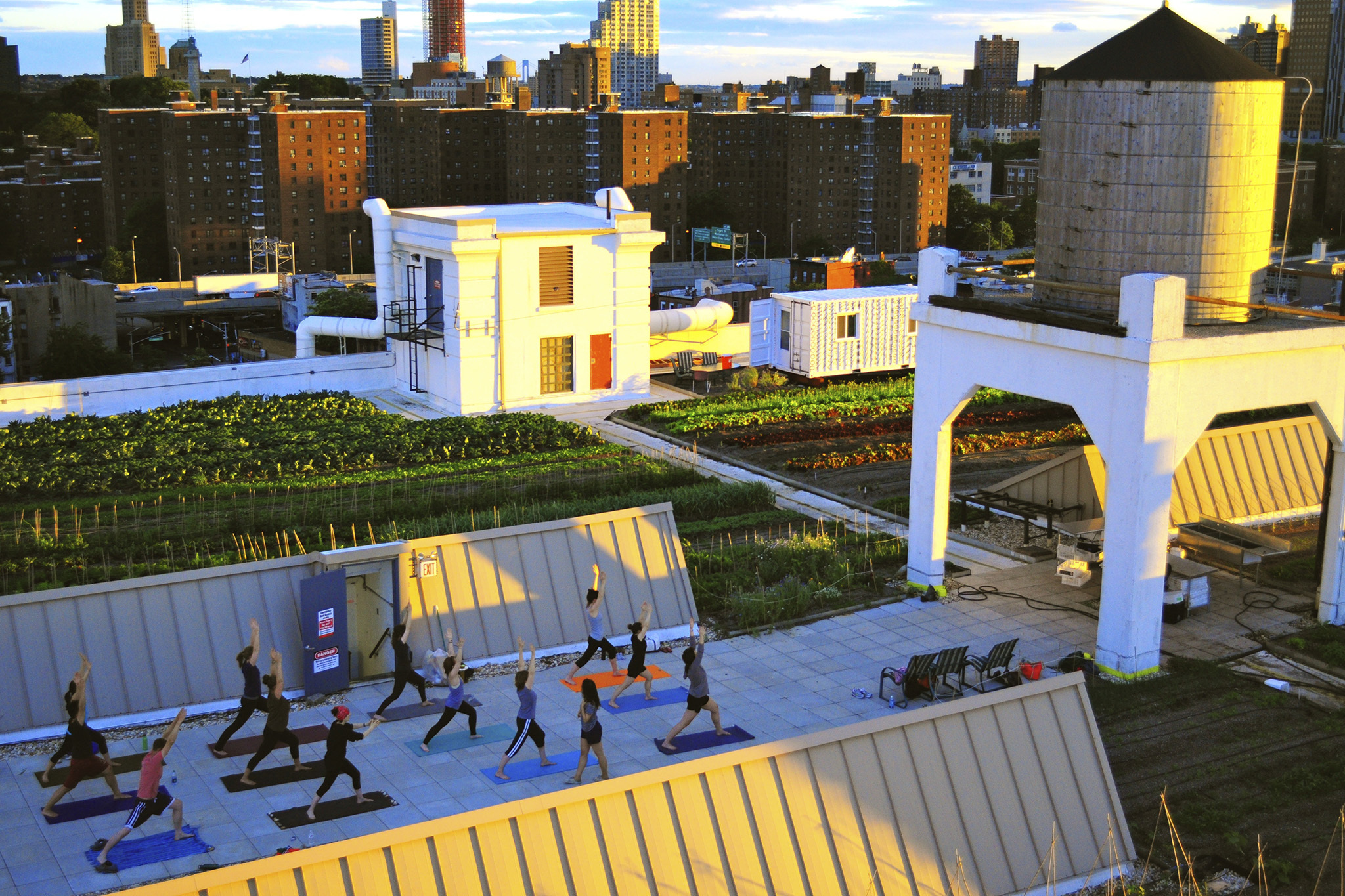 Yoga at Brooklyn Grange
