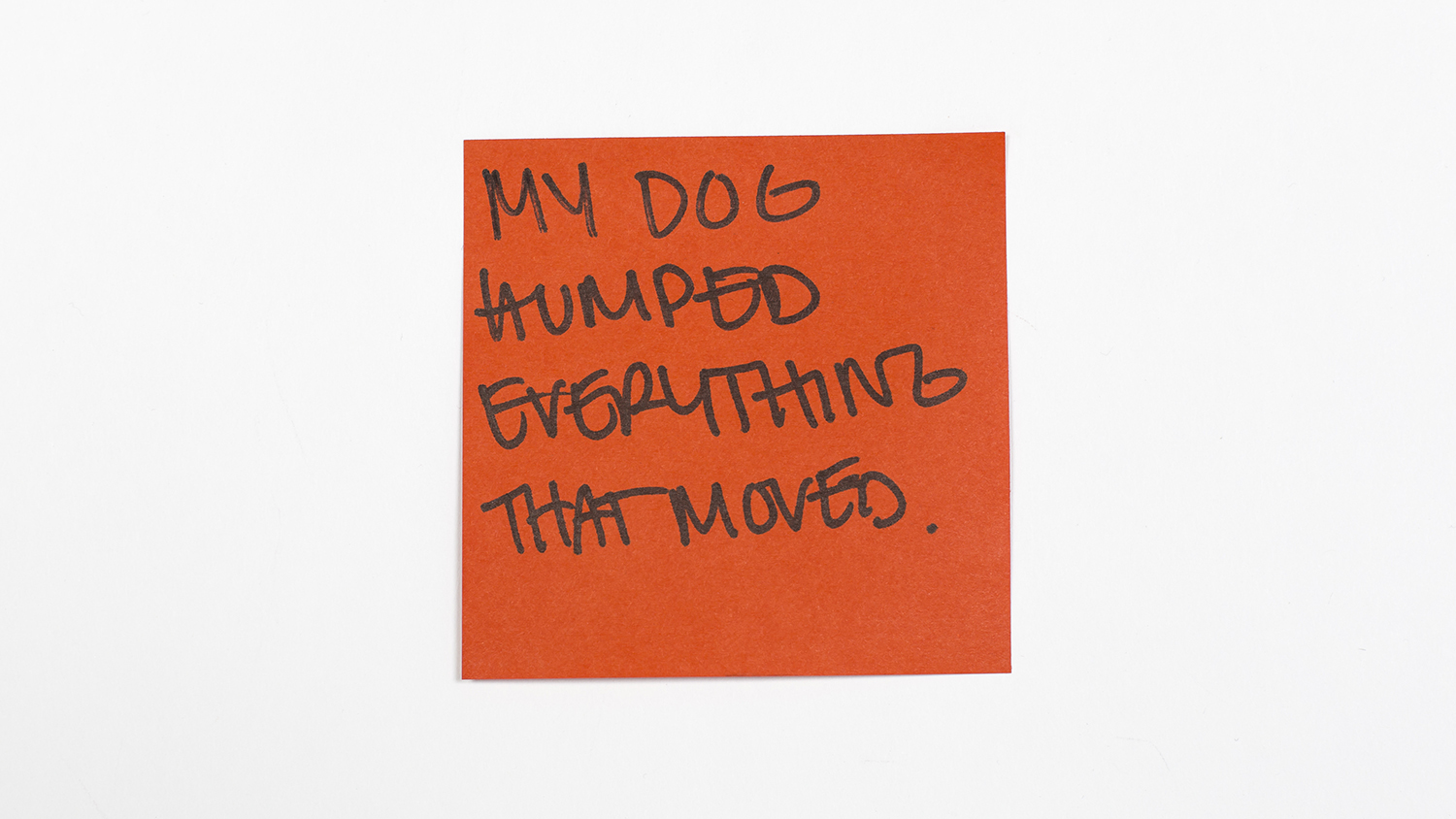 Sticky-note confessions: New Yorkers describe the worst pets they've ever had