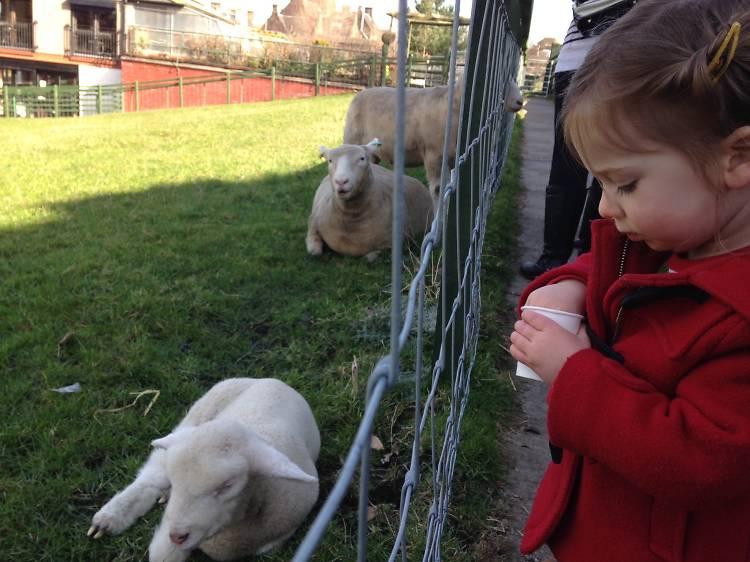6 fun things to do with kids in Edinburgh