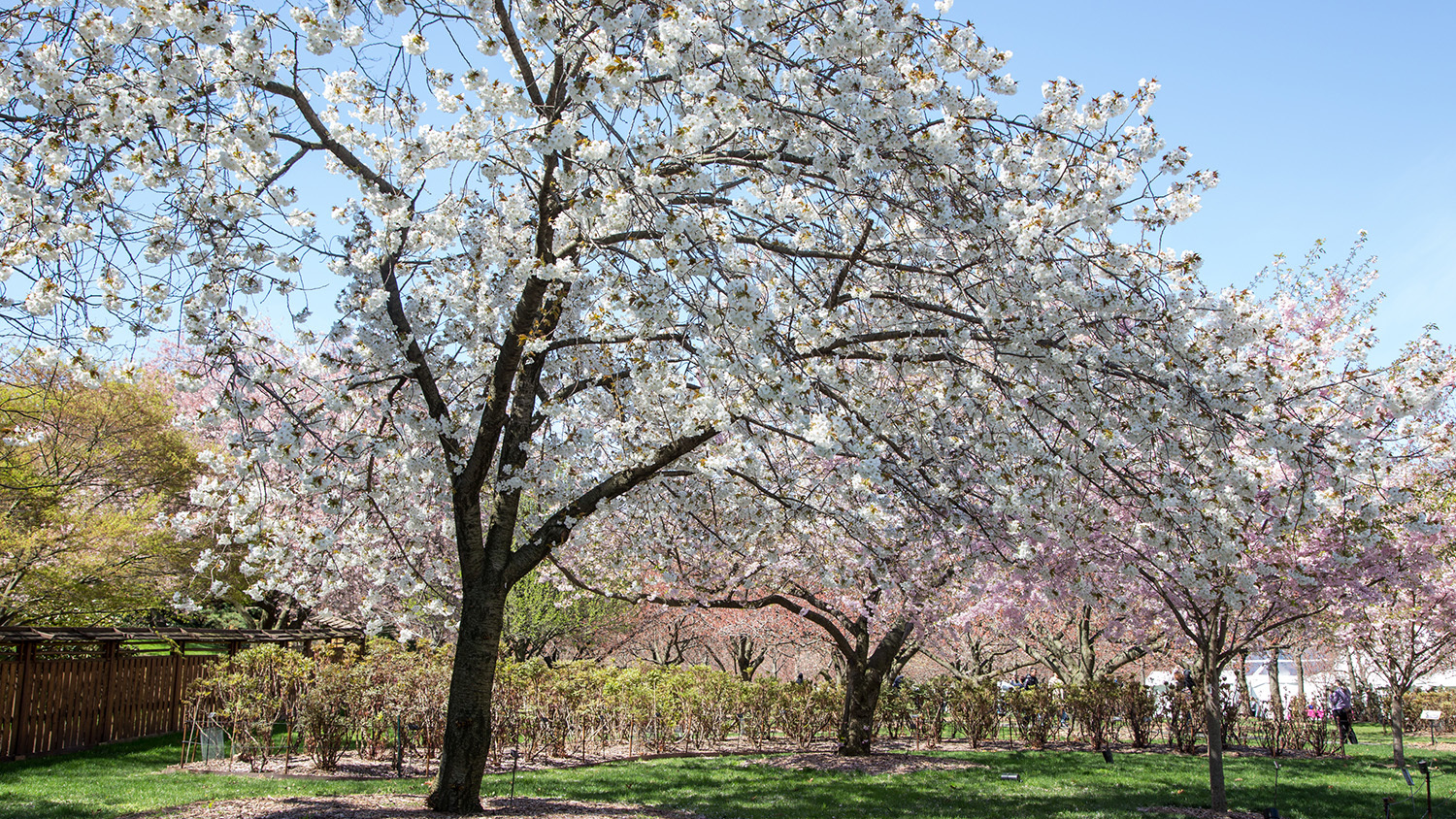 The most beautiful photos of spring in New York 2015