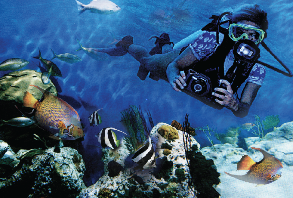 Underwater Safaris is a travel experience company in Colombo, Sri Lanka