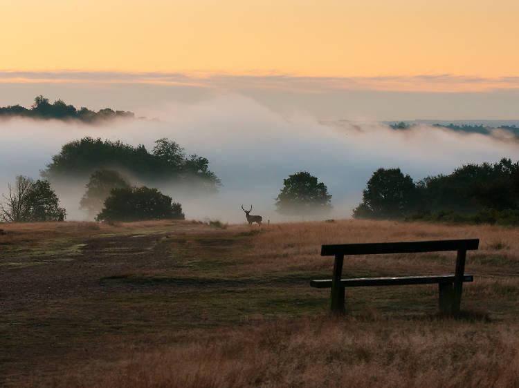 Discover more about Richmond Park