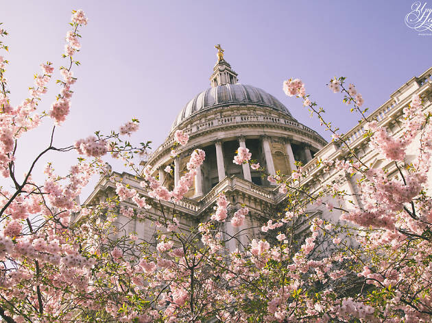 21 photos of flowers blooming all over London