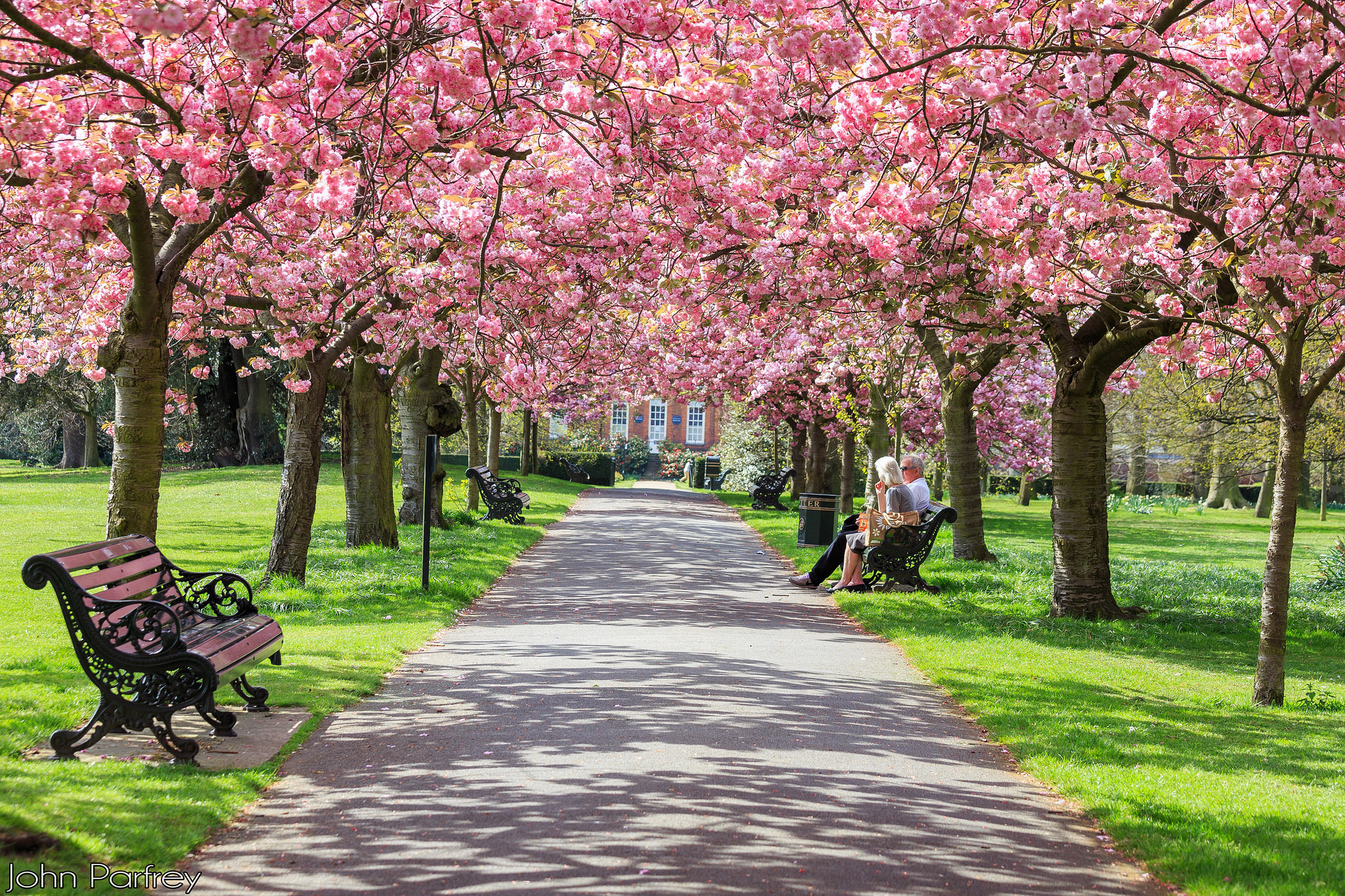 Blossom trees over a path in Greenwich Park, south-east London.