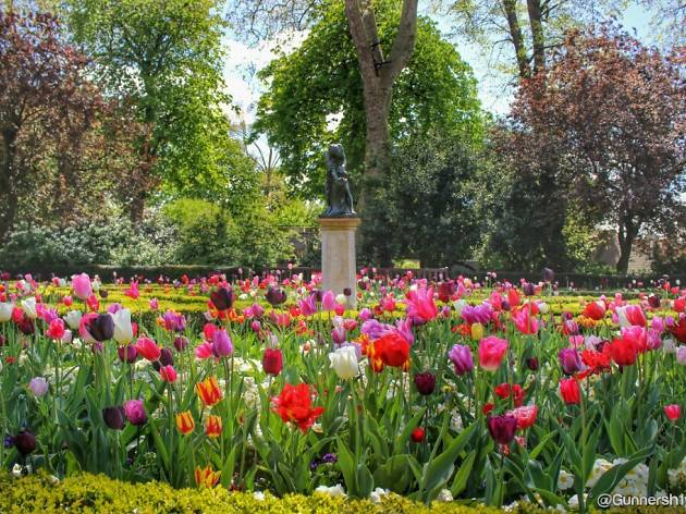 Tulips in the Dutch Garden, Holland Park, London.