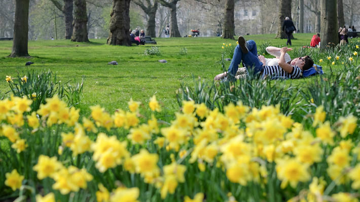 Daffodils and people sunbathing in St. James's Park