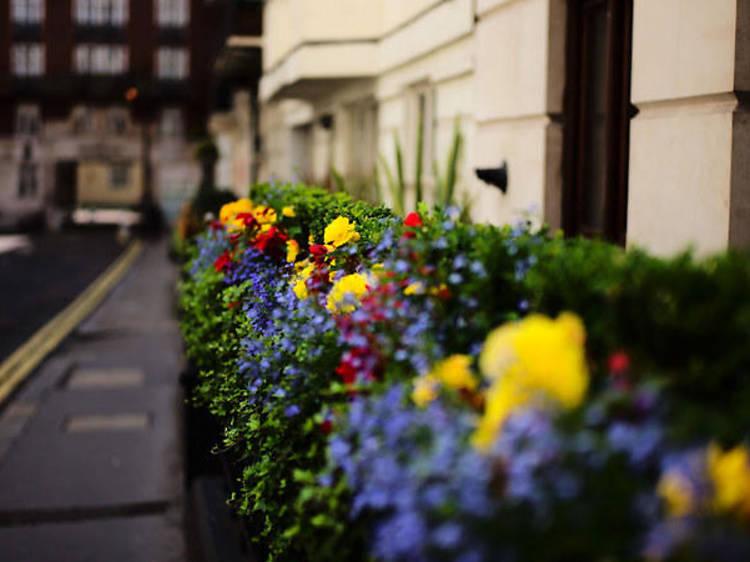 Mayfair, June flowers