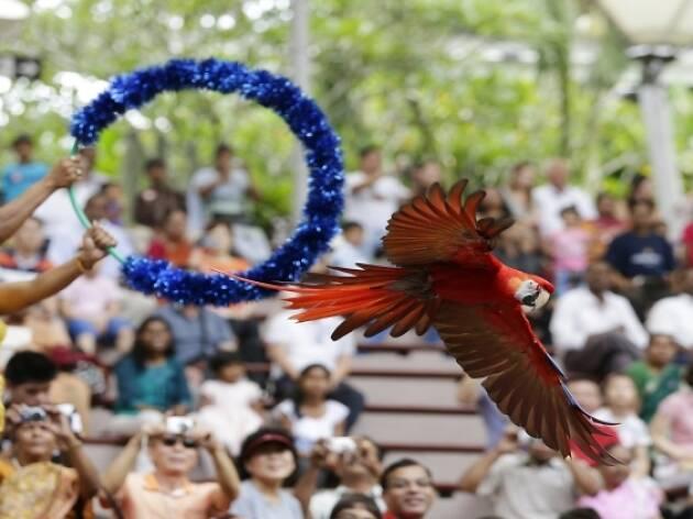 Jurong Bird Park celebrates SG50