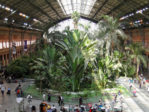 Lose yourself in the jungle: Atocha's tropical garden