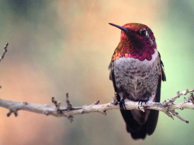 El desierto sonorense, biodiversidad en armonía