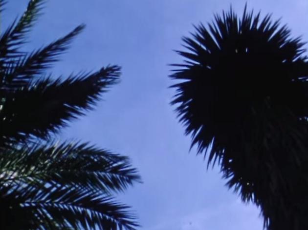 Oso Leone - Ficus