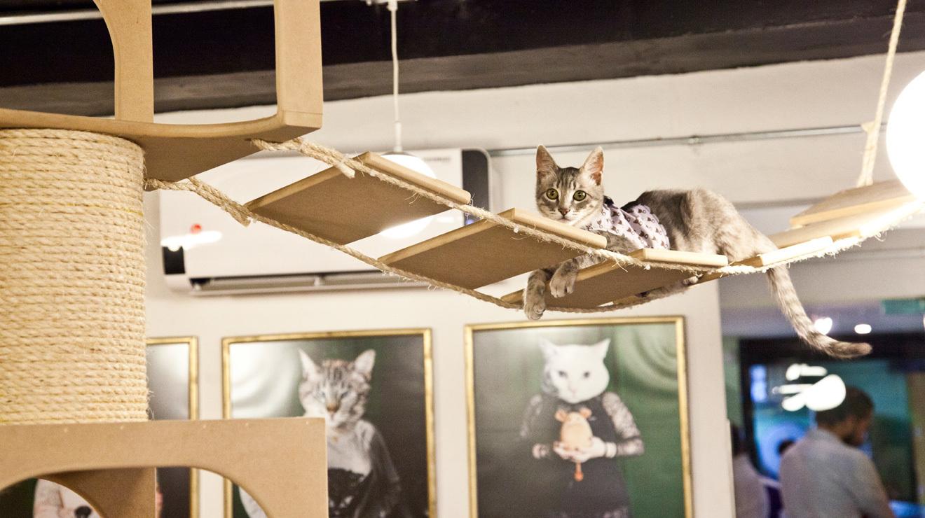 Cat Café La Gatería