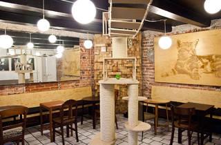 Cat Café La Gatería (Foto: Alejandra Carbajal)