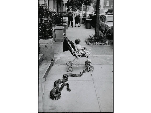 Leonard Freed, Pet Snake, New York City, 1985