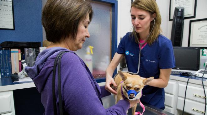 Hospitales y veterinarias