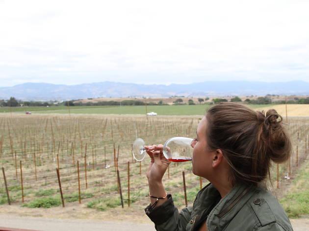 A vineyard in California