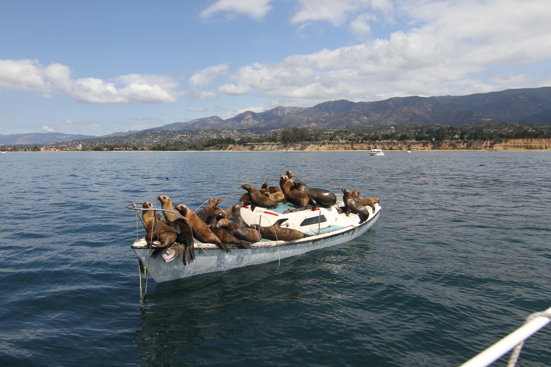 A boatload of seals