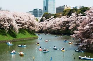 千代田のさくらまつり 2012