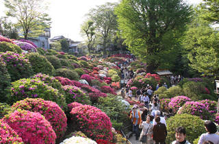 Bunkyo Azalea Festival