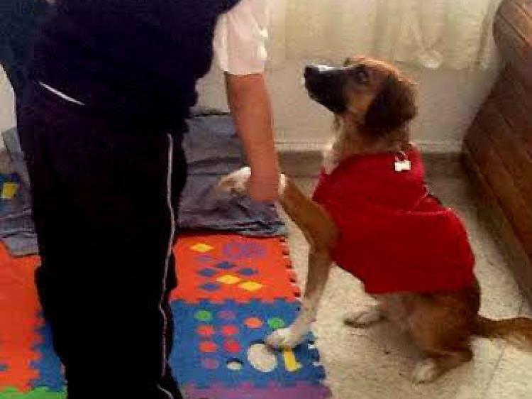 Doggy Terapia