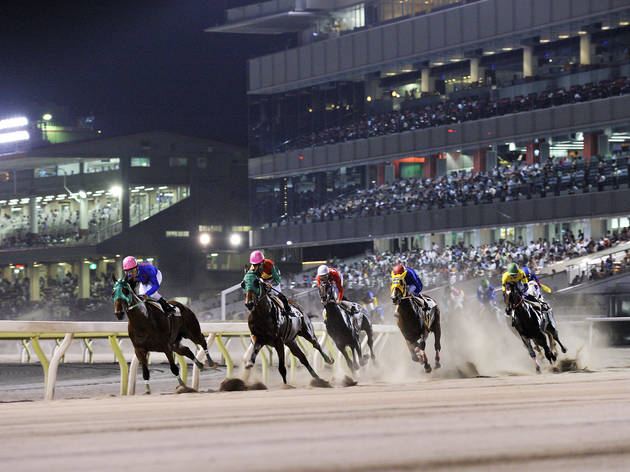 Catch a night race at Tokyo City Keiba