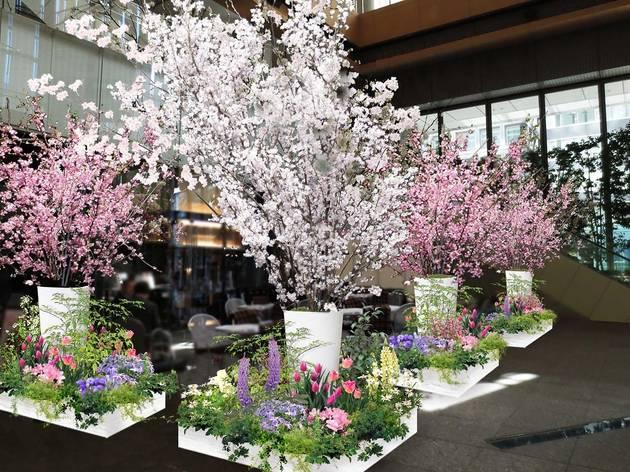 丸の内 Sakura Cafe