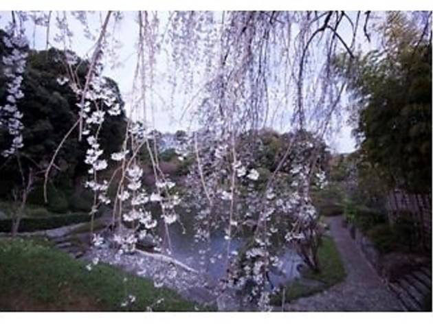 ガーデンレストラン 松濤園 櫻