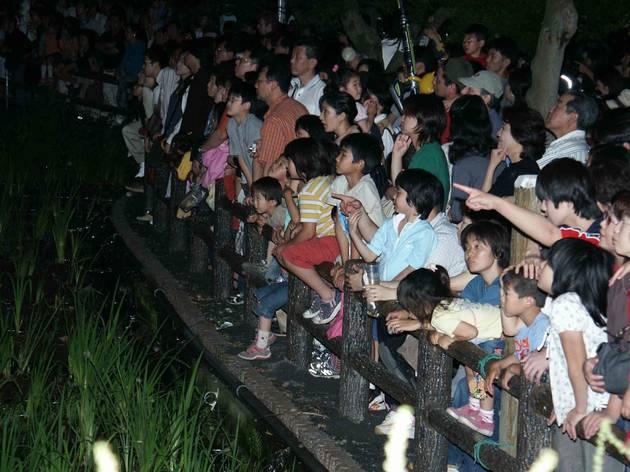 第49回 福生ほたる祭り(2014)