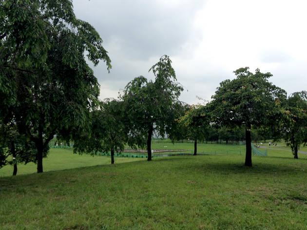 Take a nap in Ogunohara Park