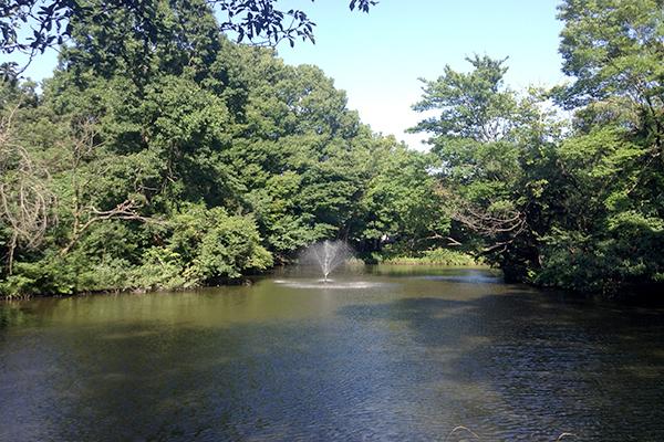 Go fishing in Wadabori Park