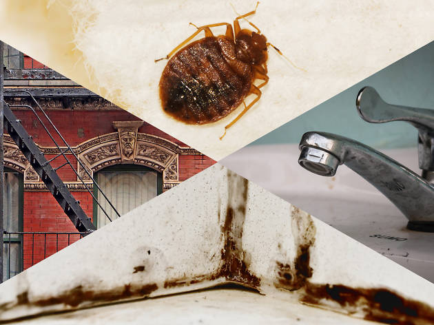 Bedbugs, noisy neighbors and NYC apartment problems