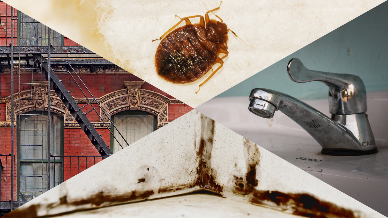 How to deal with bed bugs, noisy neighbors and other NYC apartment problems