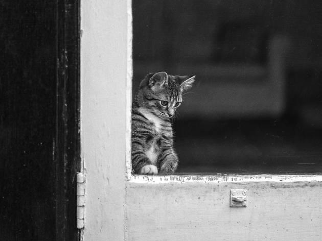 A kitten looks through a window.