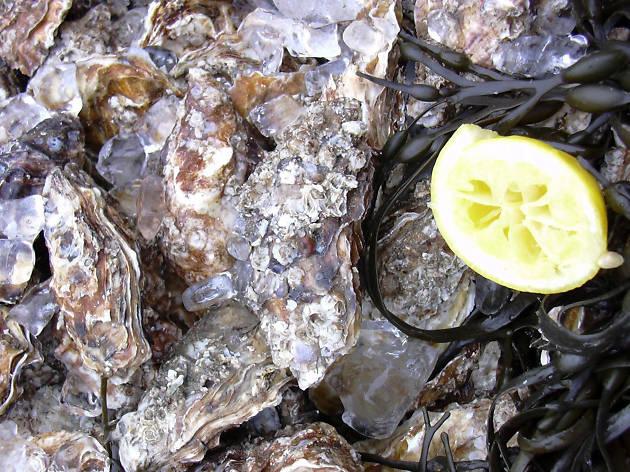 oysters, billingsgate