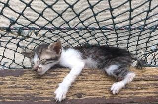 Cat Beach Sanctuary