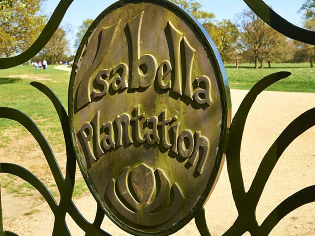 Isabella Plantation