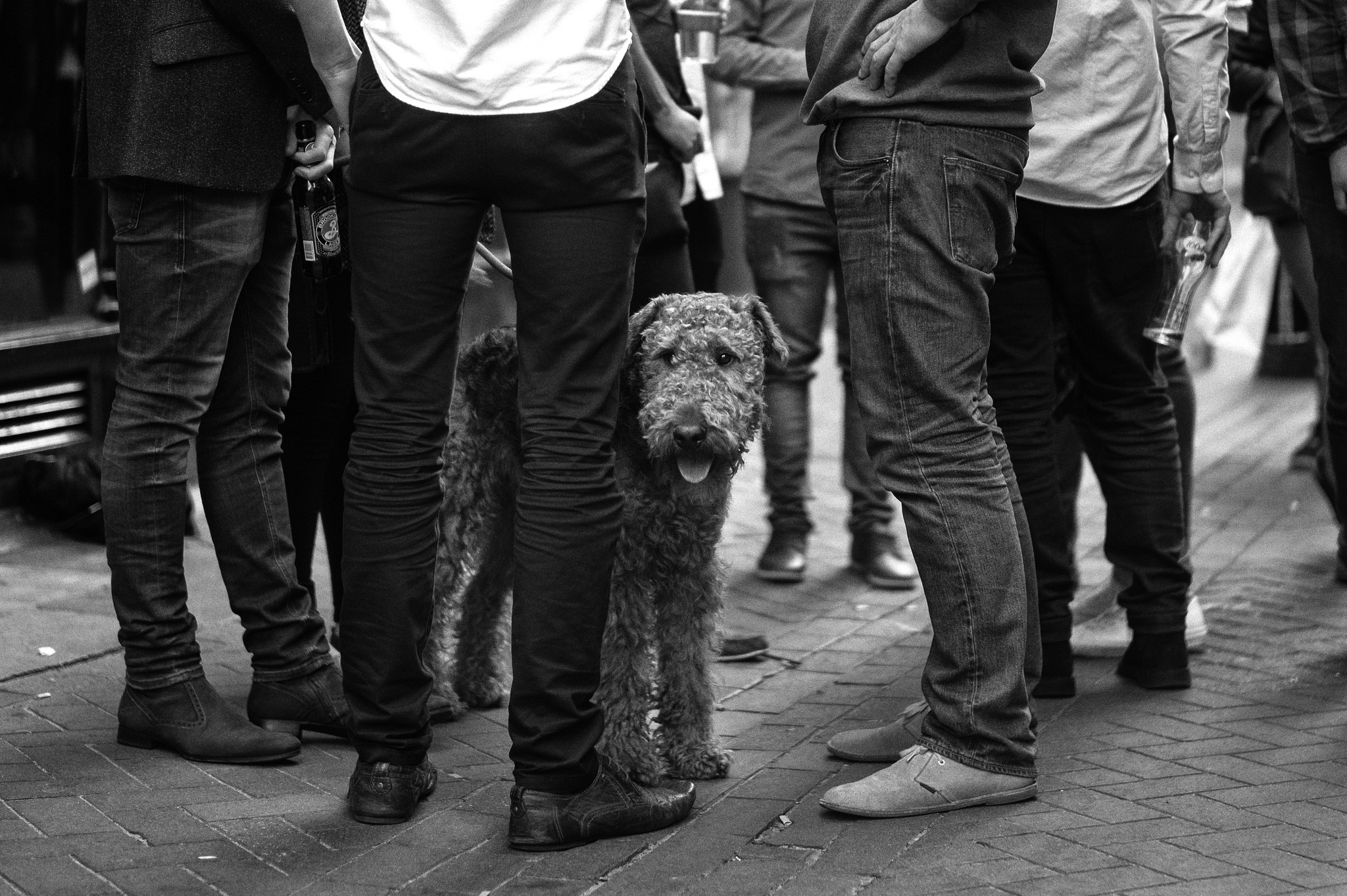 A dog surrounded by a group of men.