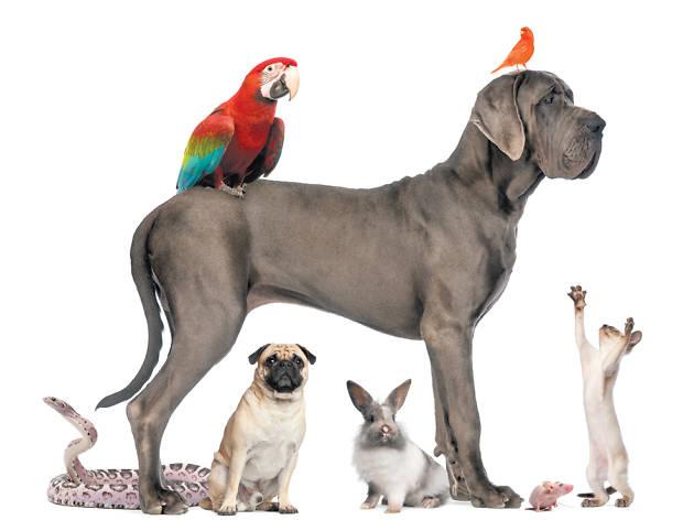 Bichos y mascotas