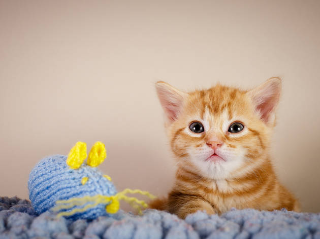 Knitting Kittens Battersea : Knitting kittens club things to do in london