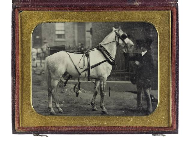 Portrait of a horse held by a groom, taken by a photographer of the London School of Photography, based at Newgate Street and Regent Circus, London, 1858-60, quarter- plate ambrotype.