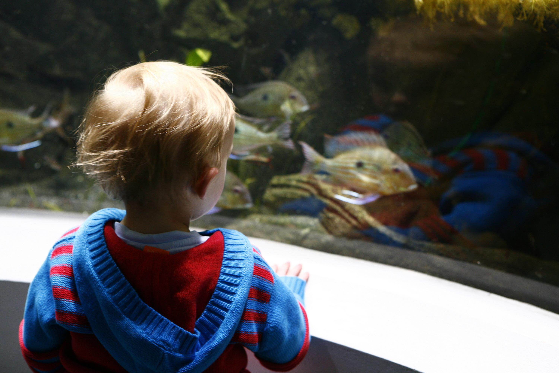 Horniman Museum Aquarium