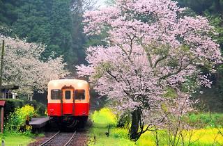 Kominato Railway: even the train looks friendly