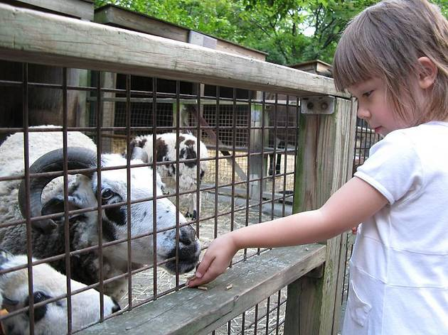 7 Best Petting Zoos in NYC To Visit With Kids