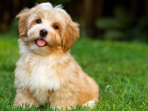 Child Friendly Dog Breeds Small