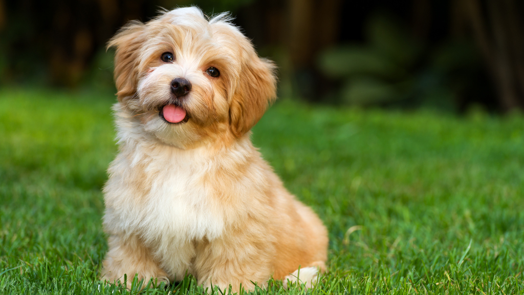 Kid Friendly Hypoallergenic Dogs