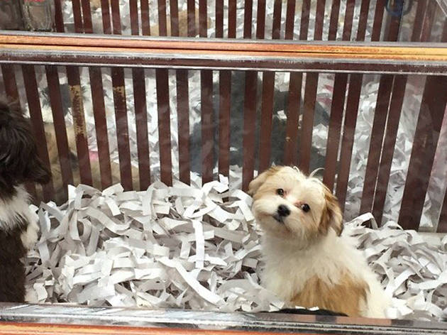 The best pet stores in NYC