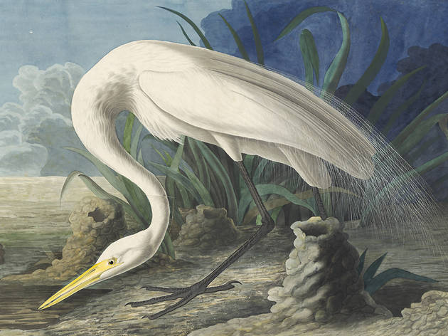 """Audubon's Aviary: Part III of the Complete Flock"""